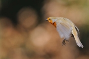 Vogels_13