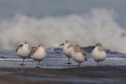 Vogels algemeen